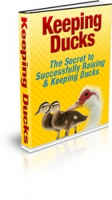 Product picture Keeping Ducks With PLR